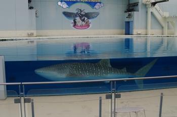 2011年8月3日(水)八景島シーパラP7・ブログ用 005raw.jpg