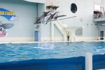 2011年8月3日(水)八景島シーパラP7・ブログ用 006.jpg