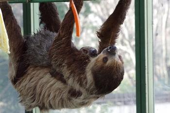2018年3月13日(火)県外遠征・千葉市動物公園・K3保存用2 299blog.JPG