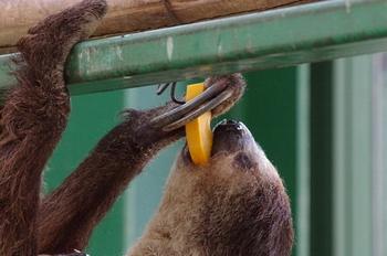 2018年3月13日(火)県外遠征・千葉市動物公園・K3保存用2 344blog.JPG